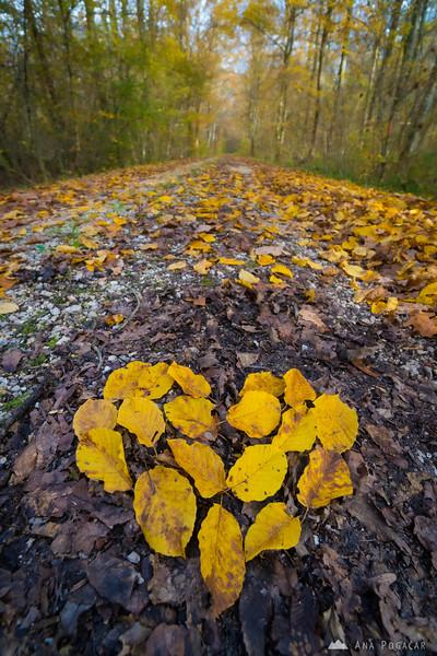 Fall colors in the Krakovski gozd forest