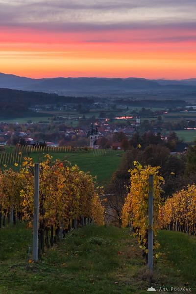 Vineyards and Kostanjevica at sunset