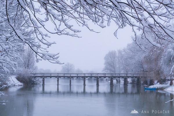 Snowy Kostanjevica