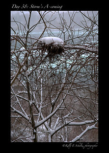 Day 38 ~ A Storm's A-coming They are calling for snow tonight and tomorrow. I like to think that there is a little bird family snuggling together in their house enjoying a cup of hot chocolate.