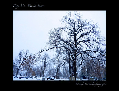 Day 33: My tree in the snow We woke up to about 2 feet of snow - the snow that was supposed to come on Thursday! Of course, it was a great opportunity to showcase my favorite tree :)