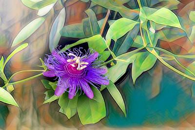 (F74) Passion Flower