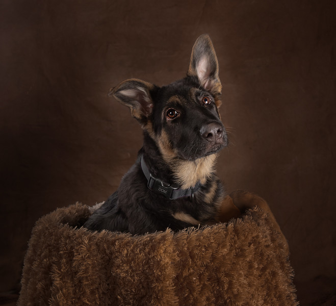 Winnipeg Dog Photography