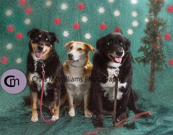dogs 11 16-4asm
