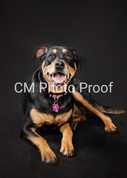 Winnipeg Dog Photographers