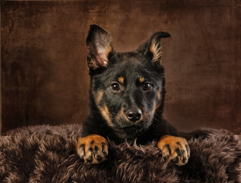 Winnipeg Dog Photographers