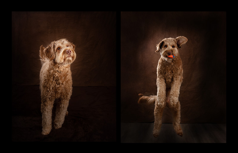 Winnipeg Pet Photography