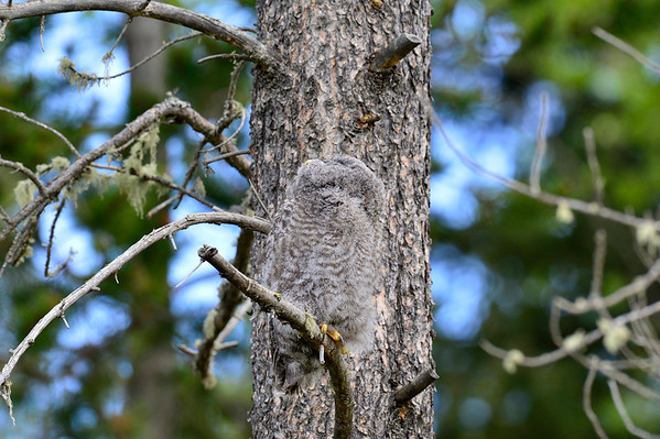 See how easy it is to miss the owl hiding against the tree.