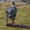 Fetch?