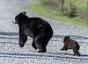 Like Mom, like Cub!