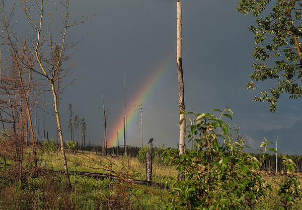 A rainbow shines brightly where a fire had ravaged the landscape only a few months earlier.