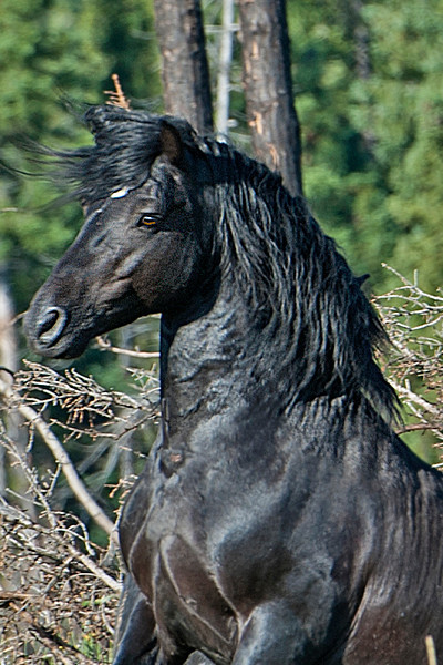Thunderbolt - the frisky black stallion with the star on his forehead and white sock was an earlier acquaintance.