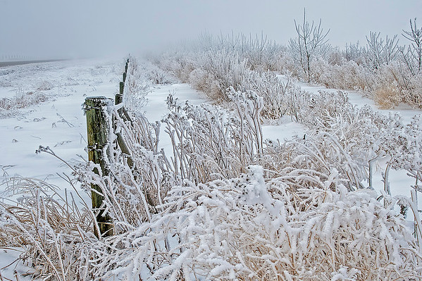 Bushes decorated in frost from the lingering fog.