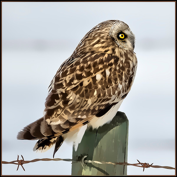 A cartoon rendering of owl.
