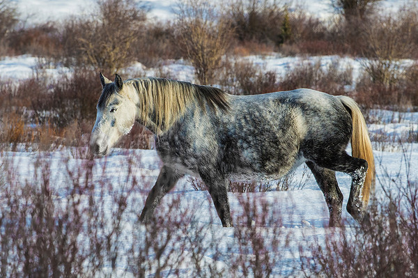 The snow frozen around her eye was hampering her site.  Colourful mane and tail.