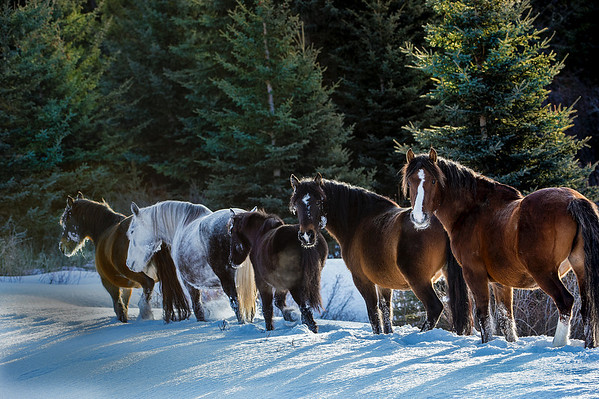 There were about 9 horses in this group.