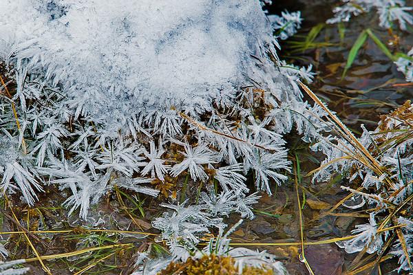 Frosty Hoar(er) Show