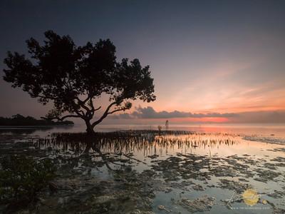 Mangrove Morning Embrace