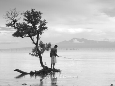 Lone Man on a Mangrove - Siquijor