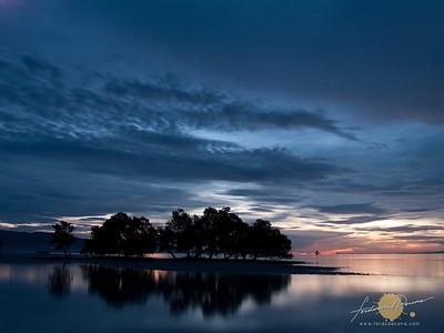 Mangroves Sunset Dance - Siquijor