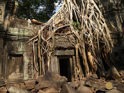 Tah Prohm Roots and Temple - Cambodia