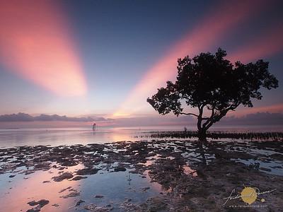 Mangrove Morning Light -  Puerto Princesa Palawan