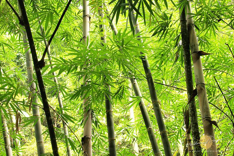 Bamboo Wall - Dumaguete