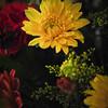 "Day 9 - ""Flower Power"""
