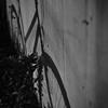 "Day 15 - ""Shadow Rider"""