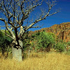 Keep River National Park. Located in Northern Territory and close to border of Western Australia