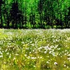 Cotten grass, soft and swaying in the wind. Spring in light green, the color of hope