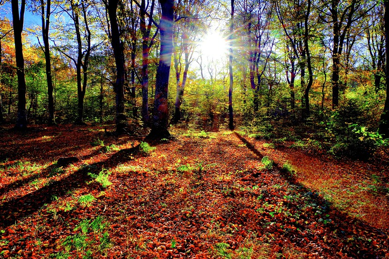 Sun spot and exposed forest floor