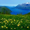 Wonderful summer North-Norway