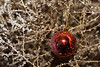Yorba Linda California Christmas time 2007: The Tumble weed project.