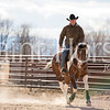 Wright Touch Performance Horses