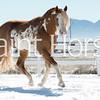 Mountain View Paint Horses