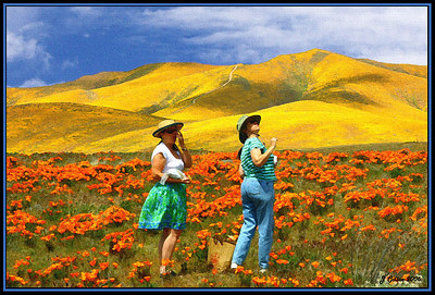 Goldfields and Poppies #2