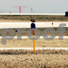 Beck Diefenbach  -  bdiefenbach@daily-chronicle.com<br /> <br /> A bird rests on a taxiway light at DeKalb Taylor Municipal Airport in DeKalb, Ill., on Thursday April 2, 2009.
