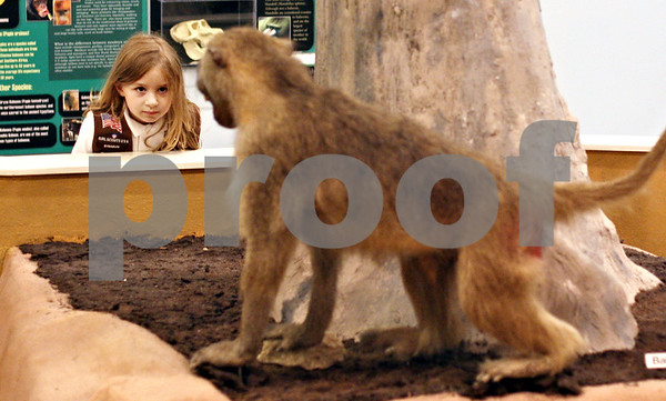 Beck Diefenbach  -  bdiefenbach@daily-chronicle.com<br /> <br /> Troop 906 girl scout Grace Federici inspects a stuffed baboon on a troop outing at the Midwest Museum of Natural History in Sycamore, Ill., on Wednesday Sept. 30, 2009.