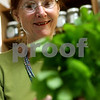 Rob Winner – rwinner@daily-chronicle.com<br /> After gathering various herbs in a garden behind her business, Evelyn Cooley of Wild Thyme in Genoa wraps the herbs together to hang for drying on Thursday morning.<br /> 09/10/2009