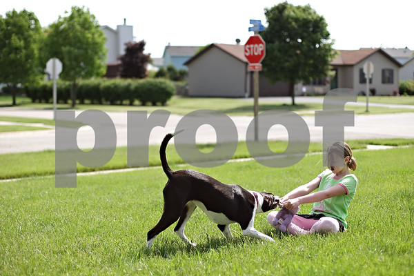 Beck Diefenbach  -  bdiefenbach@daily-chronicle.com<br /> <br /> Krystal Wilson, 11, wrestles with her service dog, Bella, over a bunny doll on the lawn of her Cortland home on Friday May 29, 2009.