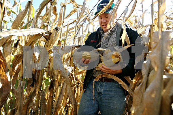 Rob Winner – rwinner@daily-chronicle.com<br /> <br /> Farmer Jamie Walter hand picks ears of corn from one of his fields in DeKalb to measure the moisture content on Wednesday October 7, 2009.
