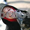 Beck Diefenbach  -  bdiefenbach@daily-chronicle.com<br /> <br /> Northern Illinois University student Katie Rodgers gets kisses from Zadok, an Akita, as part of the Animal Assistance Crisis Response group which was on the NIU campus in DeKalb, Ill., on Thursday Feb. 14, 2009.