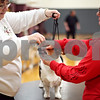 Beck Diefenbach  -  bdiefenbach@daily-chronicle.com<br /> <br /> Dog trainer Marcia Poff inspects the teeth of Pandi, a Corgi, as the owner Colleen Melmont, of DeKalb, keeps the dog in place during a showmanship class at the Haish Gym in DeKalb, Ill., on Thursday March 26, 2009.
