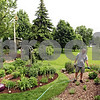 Beck Diefenbach  -  bdiefenbach@daily-chronicle.com<br /> <br /> Pat Daly waters one of his gardens in the backyard of his DeKalb home on Tuesday June 9, 2009. Daly is one of seven winnings of DeKalb's new Yards of Distinction.