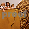 Beck Diefenbach  -  bdiefenbach@daily-chronicle.com<br /> <br /> Troop 906 girl scouts (from left) Abby Young, Sierra Price and Megan Anderson inspect the tail of a giraffe on a troop outing at the Midwest Museum of Natural History in Sycamore, Ill., on Wednesday Sept. 30, 2009.