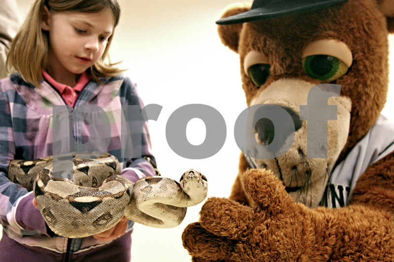 Rob Winner – rwinner@daily-chronicle.com<br /> Kyla Rachas, 7 of Maple Park, helps hold Nelson, a Boa constrictor, with Ozzie, from the Kane County Cougars, at the Midwest Museum of Natural History in Sycamore, Ill. on Wednesday December 30, 2009. Nelson is the museum's first ever mascot.