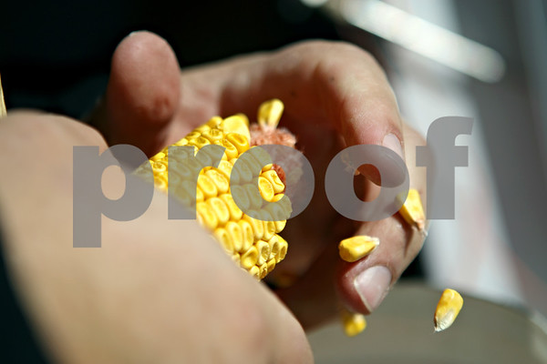 Rob Winner – rwinner@daily-chronicle.com<br /> <br /> Jamie Walter removes kernels from a cob to measure the moisture content on some sample ears of corn that he picked from one of his fields in DeKalb on Wednesday October 7, 2009.