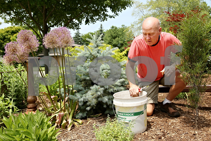Beck Diefenbach  -  bdiefenbach@daily-chronicle.com<br /> <br /> Pat Daly inspects the plants in the garden in front of his DeKalb home on Wednesday June 10, 2009. Daly is one of seven winnings of DeKalb's new Yards of Distinction.