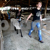Rob Winner – rwinner@daily-chronicle.com<br /> Sisters Emily Bemis (front to back), 15, Courtney, 13, and Heather, 11, of DeKalb, prepare their sheep before the sheep show on Saturday morning during the 4-H Fair at the Sandwich Fairgrounds.<br /> 08/01/2009